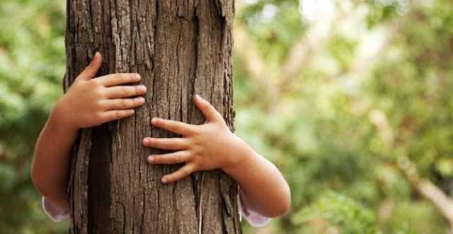 Un albero per ogni nuovo nato e minore adottato, l'iniziativa a Iglesias