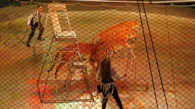 Vietati i circhi con animali e stop ai botti: la decisione del Comune a Sassari