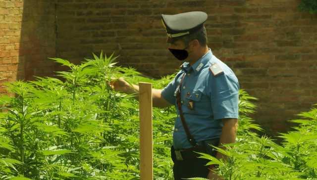 07-10-2021_nel_giardino_di_casa_aveva_le_piante_di_marijuana__la_scoperta_a_perdaxius.html